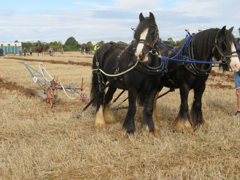Bridgwater & District Agricultural Society Ploughing Match
